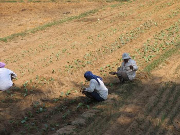 Agriculture in Goa in Goa