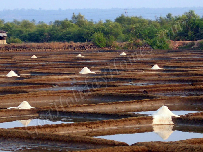 Salt Pans In Arpora