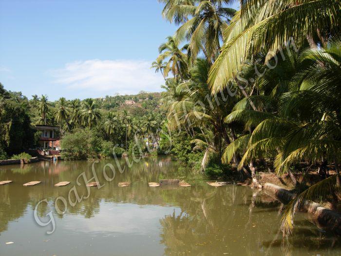 Assnora in Goa