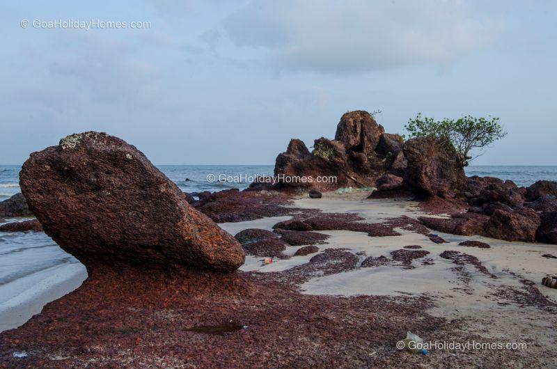 Canaguinim Beach in Goa