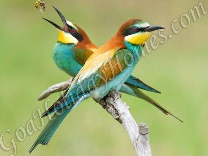 Salim Ali Bird Sanctuary in Goa