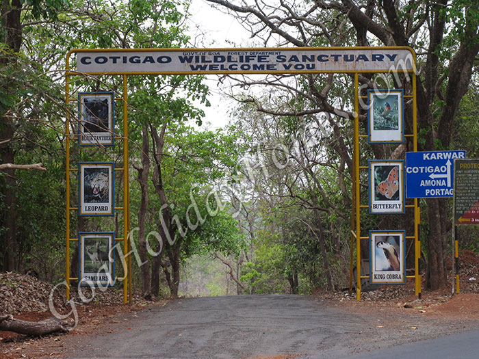 Cotigao Wildlife Sanctuary in Goa