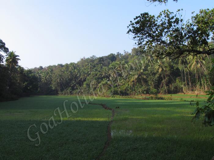 Dhargalim in Goa