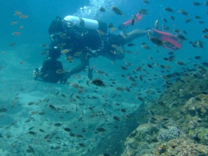 Goa diving in Goa