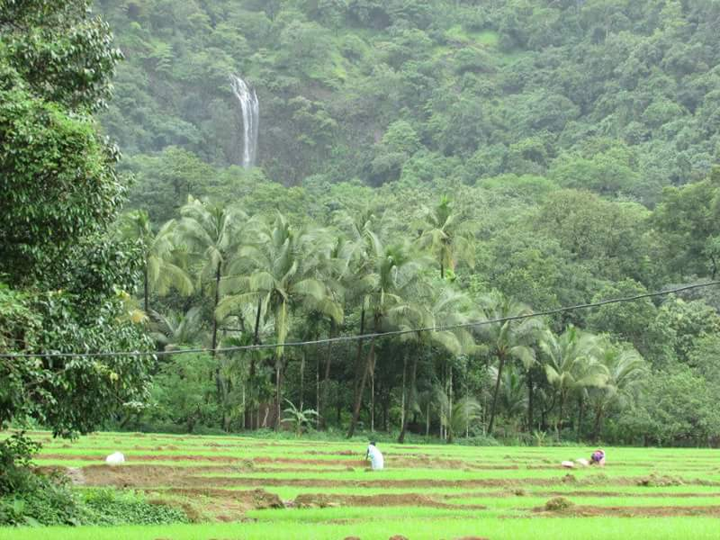 Kuskem Waterfall in Goa