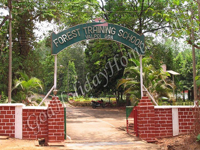 Forest Training School