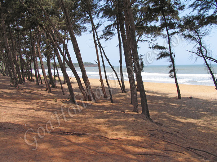Galgibag Beach in Goa