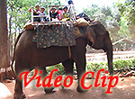 Video clip of Bondla Wildlife Sanctuary