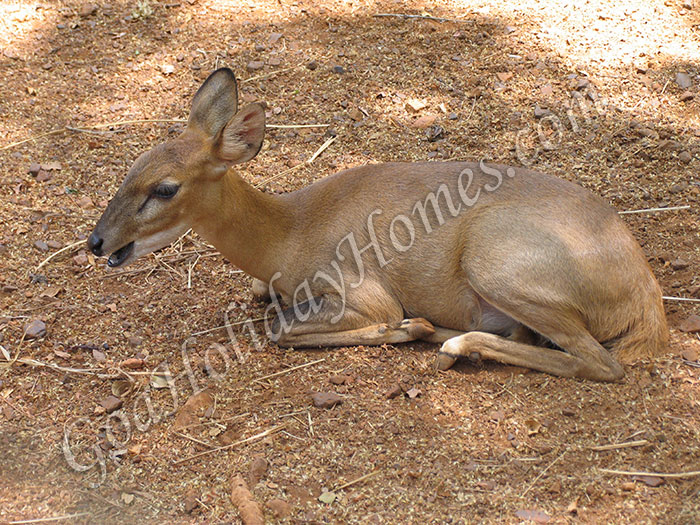 Netravali Wildlife Sanctuary in Goa