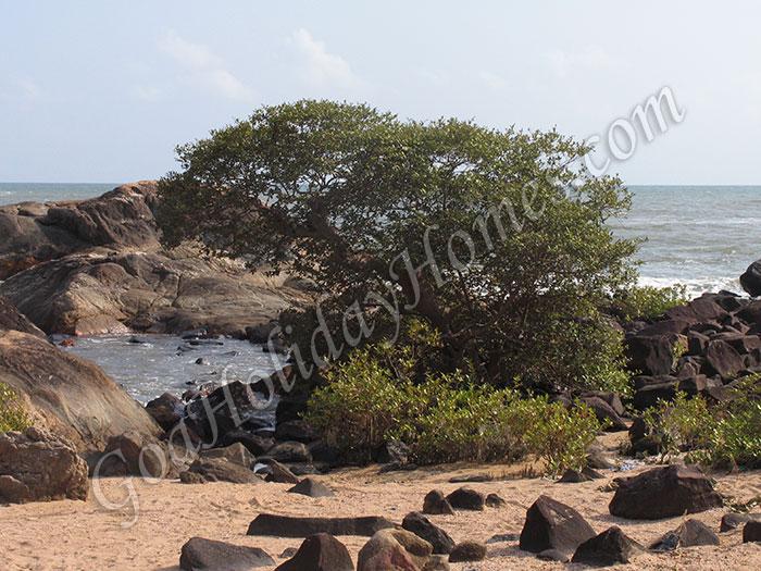 Colom beach in Goa