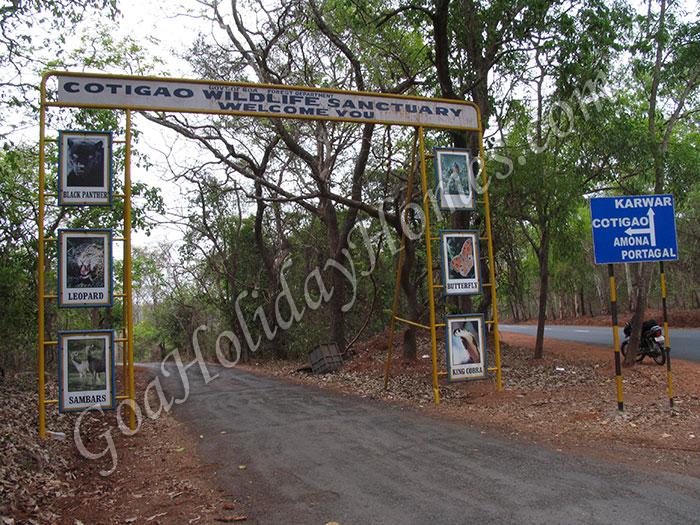 Cotigao Wildlife Sanctuary in Goa