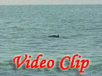 Video clip of Dolphin Trip