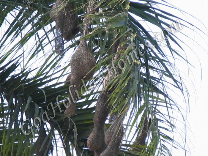 Loutolim in Goa
