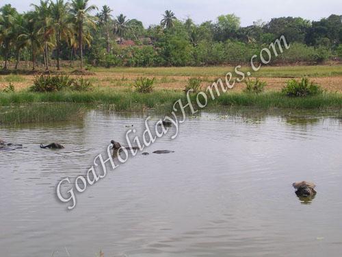 Marcel in Goa