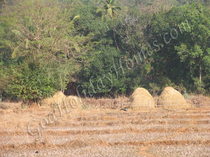 Warkhand in Goa